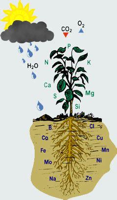 Plant Abiotic Stress - KSU Faculty