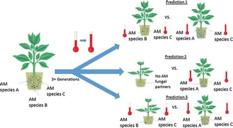 Abiotic Stress in Plants and Metabolic Responses - InTech